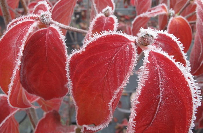 erster Frost im Herbst (by W. Eberts)