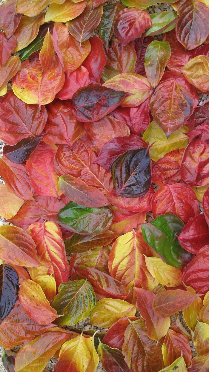 Herbstlaub (by W. Eberts)